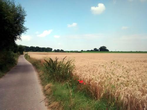 Und noch Blick über die Kornfelder bei Duisburg-Baerl.