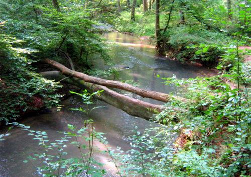 Axiom 562: An jedem Bach existiert stets ein umgefallener Baumstamm, der ein gutes Fotomotiv abgibt.