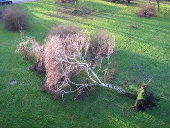 Entwurzelter Baum hinter unserem Haus